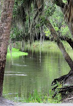 River Scenic by Rosalie Scanlon