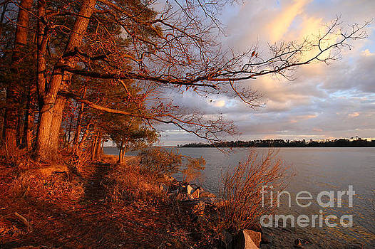 River Sunset Tree by Rachel Morrison