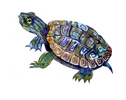 River Turtle, Slider artwork illustration by Suren Nersisyan