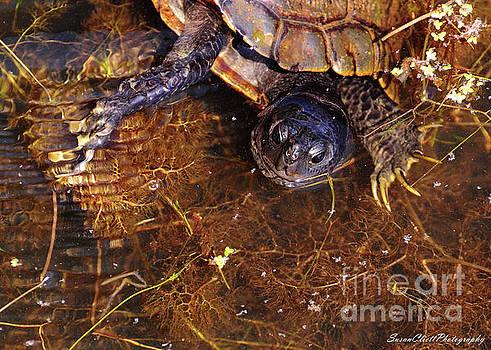 River Turtle by Susan Cliett