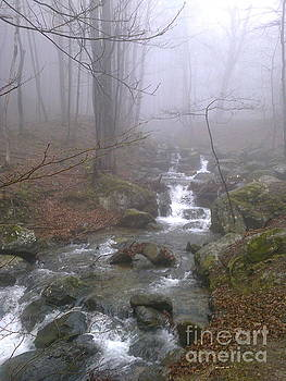 River by Zornitsa Tsvetkova