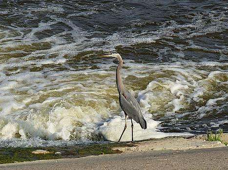 Riverbank Crane  by Barkley Simpson
