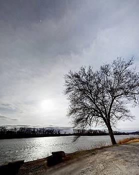 Riverwalk tree by Dustin Soph