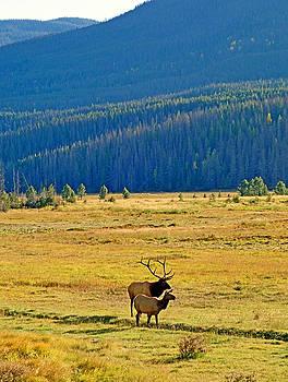 Robert Meyers-Lussier - RMNP Plains in Autumn