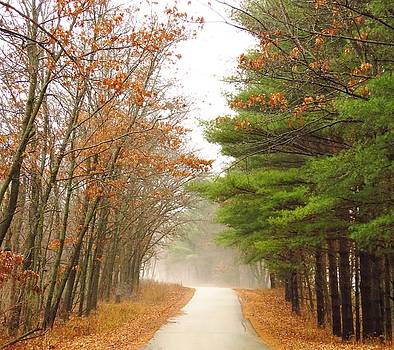 Road Between Seasons by Lori Frisch