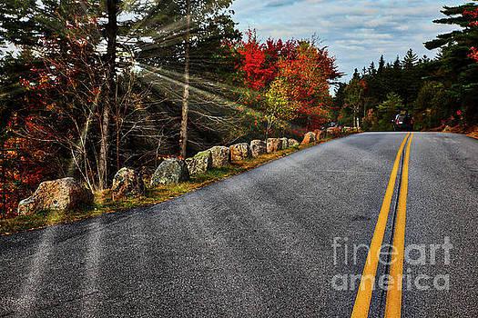 Road in Acadia NP by Miro Vrlik