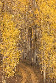 Scott Wheeler - Road in the Aspen Forest