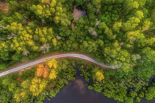 Road inside jungle from above by Pradeep Raja PRINTS