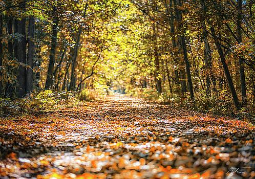 Autumn Fall leaves Michigan Path by J Thomas