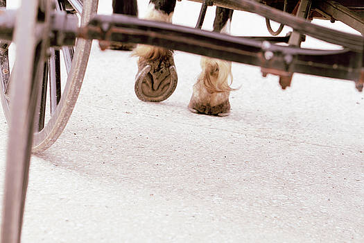 Road Not Taken by Susie Gordon