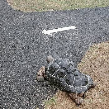 Road sign of the tortoise  by Sobajan Tellfortunes