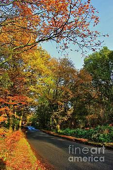 Road Through Epping  by Vicki Spindler