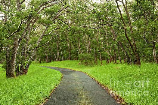 Charmian Vistaunet - Road through Koa Tree Forest