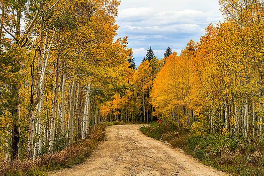 Road To Fall by Juli Ellen