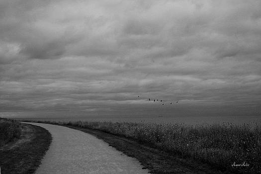 Road To The Left Black and White by Marko Mitic