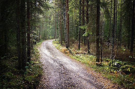 Road to the Light by Teemu Tretjakov
