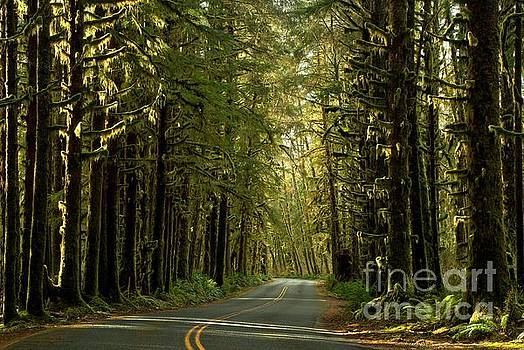 Adam Jewell - Road To The Rainforest