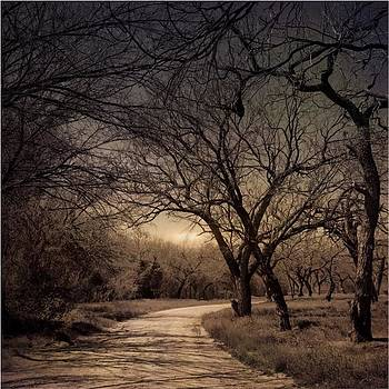 #road #trees #iphoneography #landscape by Judy Green