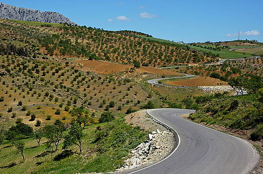 Sami Sarkis - Road winding between fields of olive trees