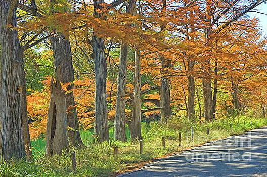 Robert Anschutz - Roadside Cypress
