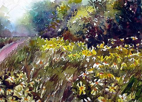 Roadside Daisies by Chito Gonzaga