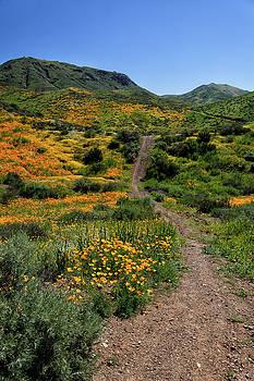 Cliff Wassmann - Roadside Flowers