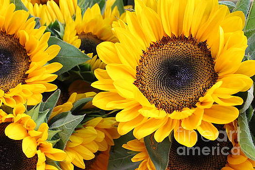 Roadside Sunflowers by Dora Sofia Caputo Photographic Art and Design
