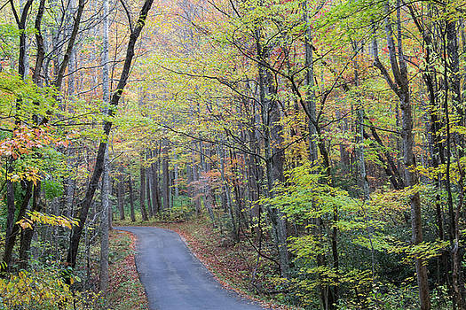 Roadway in Great Smoky Mountains in fall by Natalie Schorr