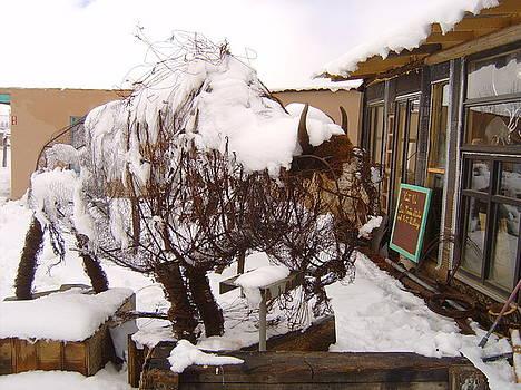 Roaming Buffalo by Floyd Archuleta