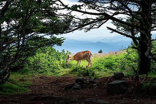 Roan Deer by Jim Neal
