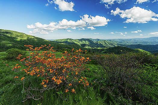Roan Highlands - Flame Azalea by Jason Penland