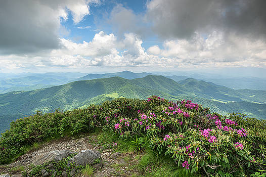 Roan Mountain Highlands Grassy Ridge Rhododendron by Mark VanDyke