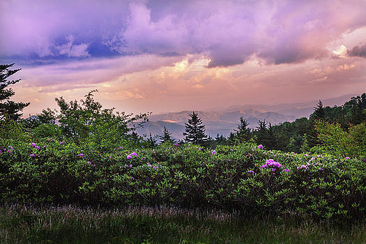 Roan Mountain Rhododendrons by Carol Mellema