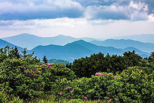 Roan Mountain Rhodos by Dale R Carlson