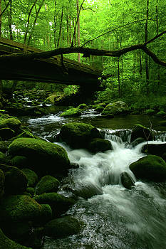 Roaring Fork Bridge by Pat Turner