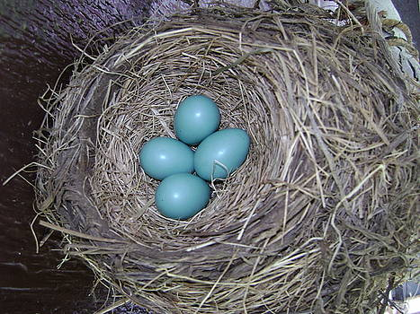 Robin eggs by Fay Hauswirth