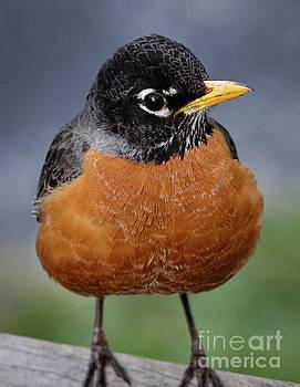 Robin II by Douglas Stucky