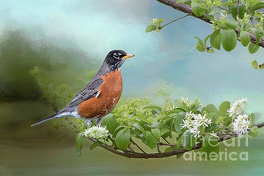 Robin in Chinese Fringe Tree by Bonnie Barry