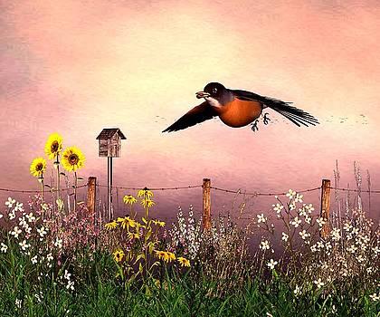 John Junek - Robin in flight