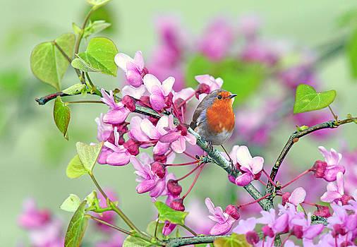 Nina Bradica - Robin in the Spring