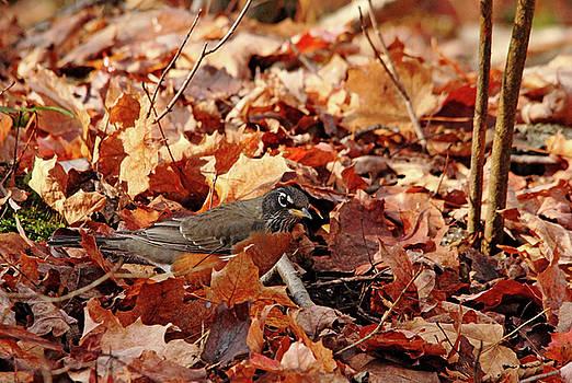 Debbie Oppermann - Robin Playing In Fallen Leaves