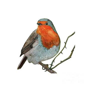 Robin Red Breast Perched on Rose  in watercolour by Eleanore Ditchburn