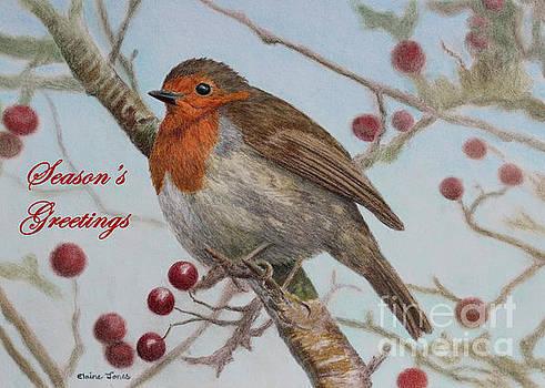 Robin Season's Greetings Card by Elaine Jones