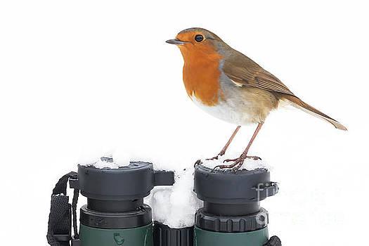 Simon Bratt Photography LRPS - Robin wildbird sat on binoculars in winter