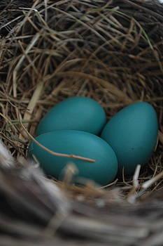 Robins Nest by Amanda Lonergan