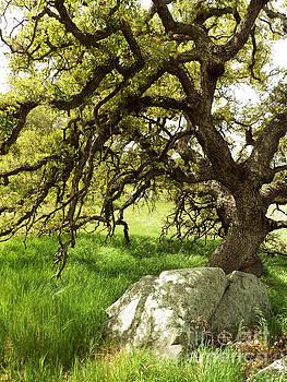 Rock and Oak by Robert Ball