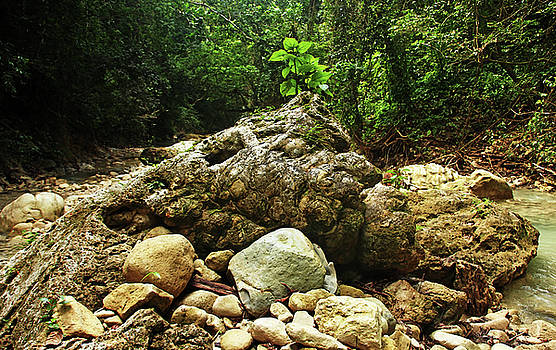 Debbie Oppermann - Rock Centerpiece Rio Damajagua