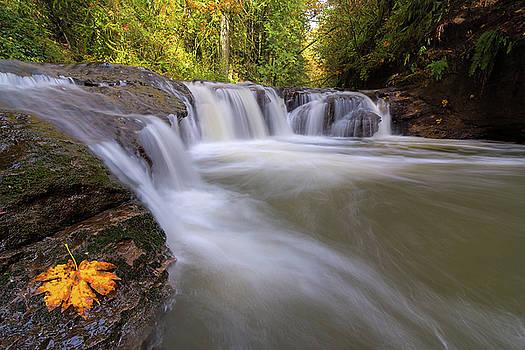 Rock Creek in Happy Valley Oregon by David Gn
