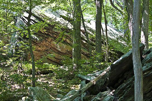 Darlene Bell - Rock Forest