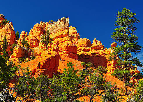 Rock formation in red canyon park in Utah. by Jay Mudaliar